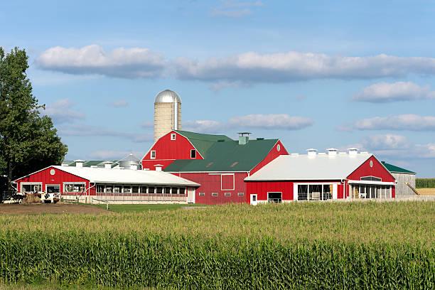Red Dairy Barns en champ de maïs - Photo