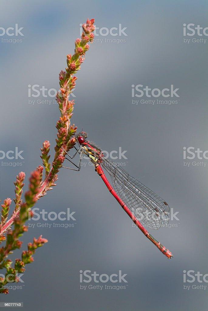 Rosso Leste selvaggio - Foto stock royalty-free di Composizione verticale