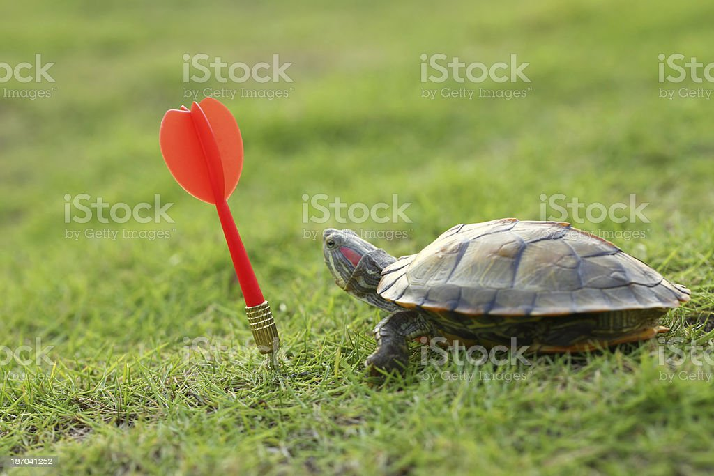 Red Dart and Turtle stock photo