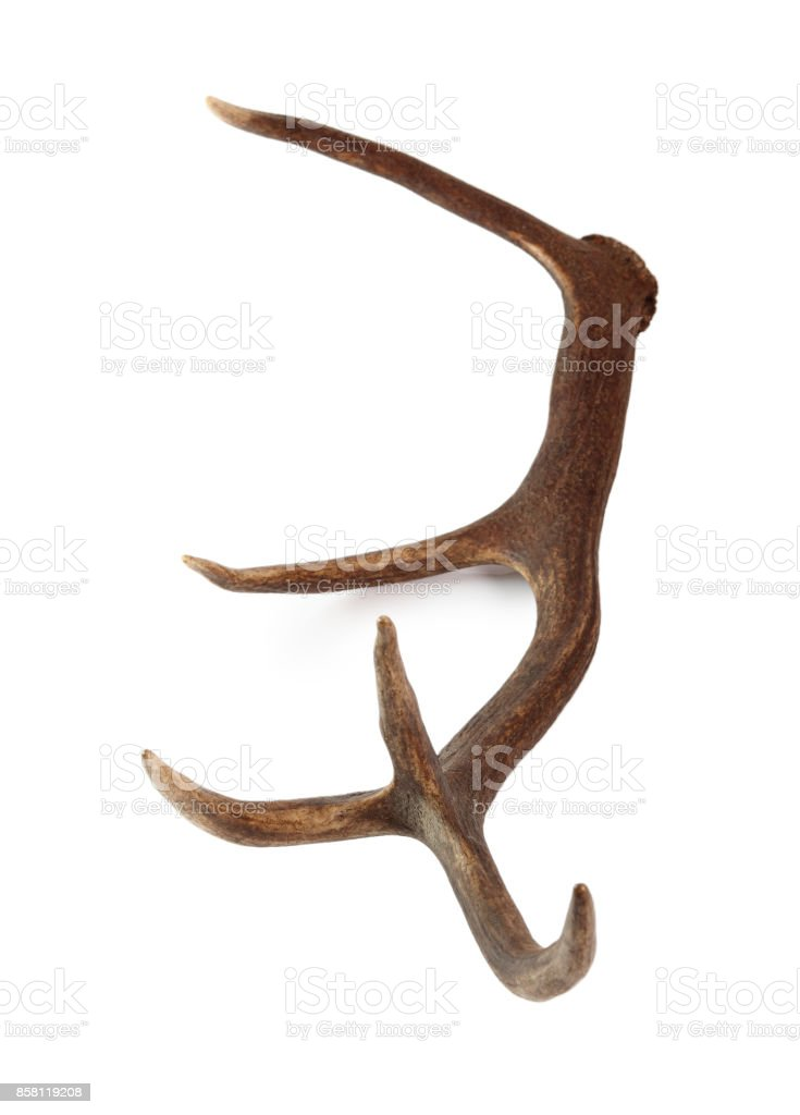 Red Deer Antler Isolated On A White Background Stock Photo More