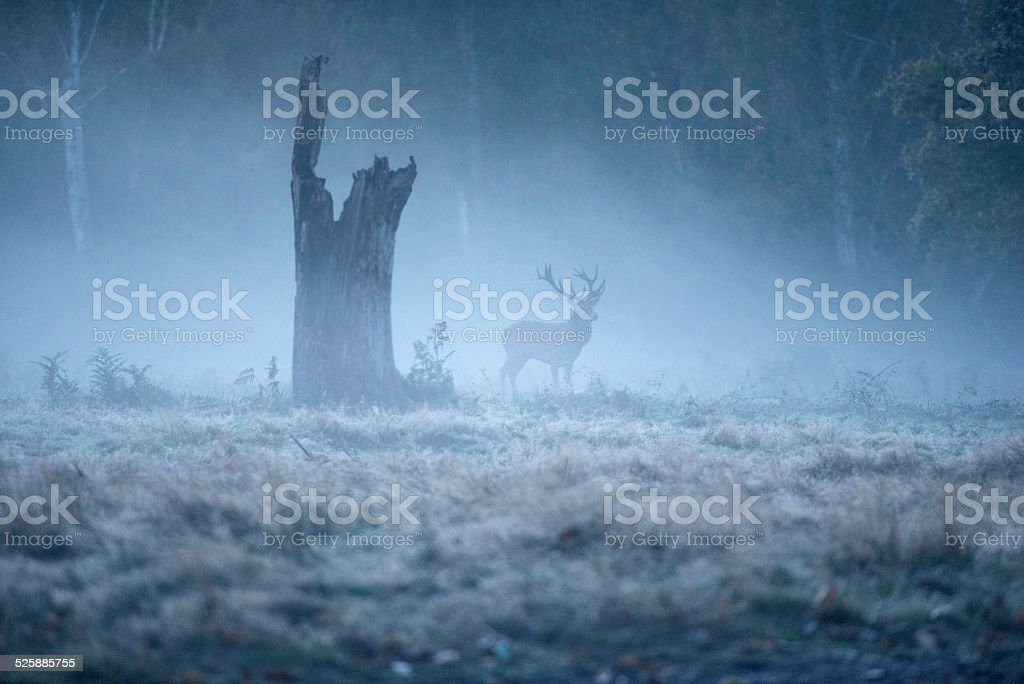 Red deer stag! stock photo