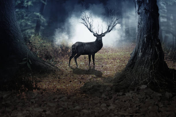A Red Deer Stag walking into the nature deer in the nature rutting stock pictures, royalty-free photos & images