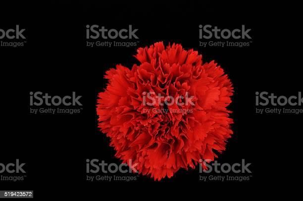 Red dianthus picture id519423572?b=1&k=6&m=519423572&s=612x612&h=mvjfcnsswessizmqgzjwl2mkdjd3xocp kuvjmblwbk=