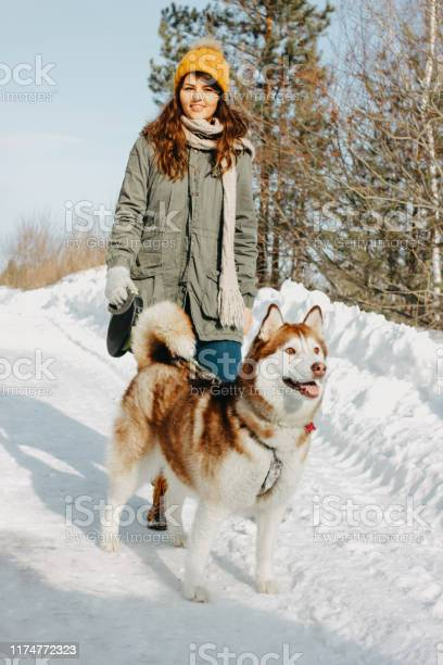 Red dog husky with his mistress brunette girl in the forest outdoors picture id1174772323?b=1&k=6&m=1174772323&s=612x612&h=m3vrb379v7vvtap vdny09fh g8sb6kj4zeoo2qp9h8=