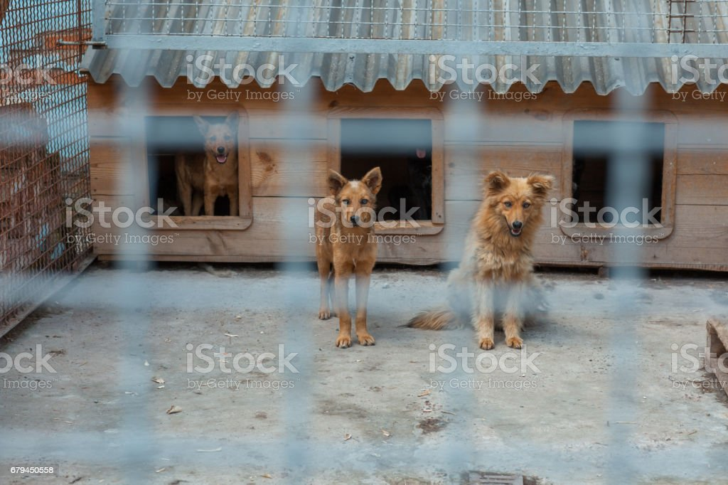 Red dog in a cage royalty-free stock photo