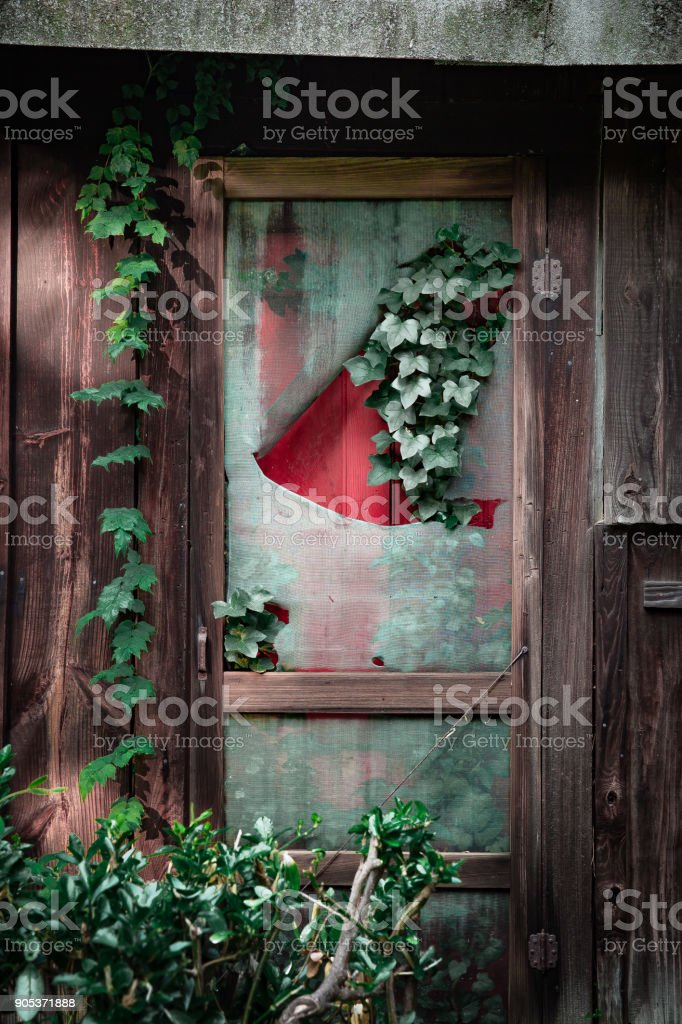 Red door covered with vines stock photo