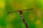 A Dragonfly is an Insect Belonging to the Order Odonata, Infraorder Anisoptera. Adult Dragonflies are Characterized by Large, Multifaceted Eyes, Two Pairs of Strong, Transparent Wings, Sometimes with Colored Patches, and an Elongated Body.