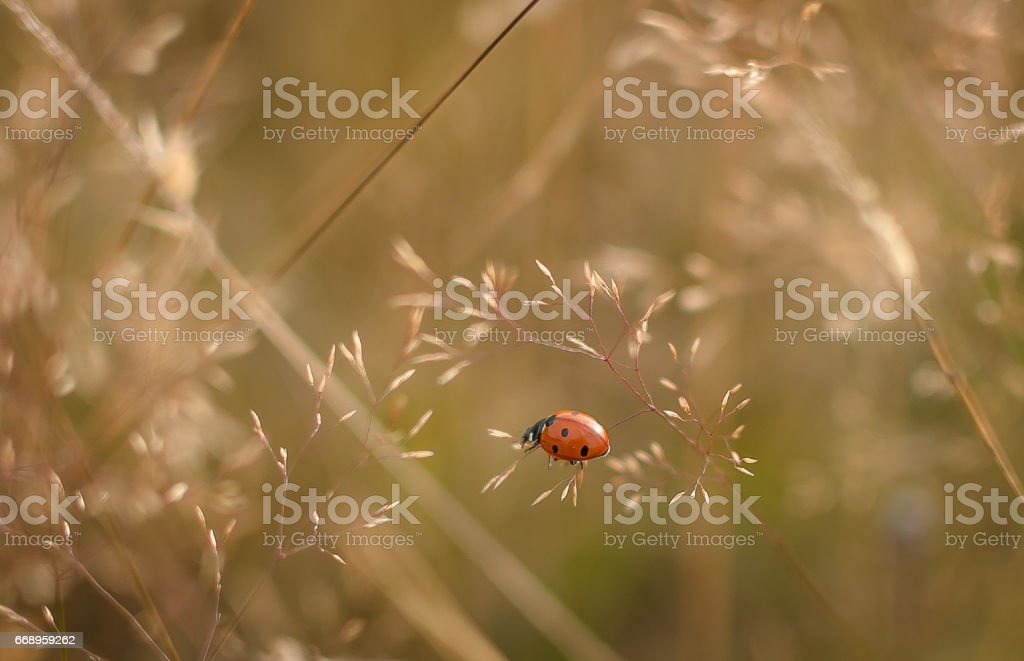Red drops foto stock royalty-free