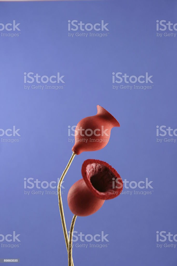 Red dry flowers, royalty-free stock photo