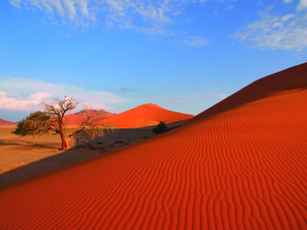 Red Dunes, Namib, Desert, Namibia Red Sand Dunes, Sand Desert, Coast Desert, Shifting Dunes, Highest Sand Dunes, Wavy Sand Structure, Acacia Trees, Withered Trees, Sossusvlei, Namib Naukluft National Park, UNESCO World Nature Heritage, Dunes Ascensions, Jeep Tours namibia stock pictures, royalty-free photos & images