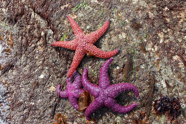 rosso end viola stelle - immerse in the stars foto e immagini stock