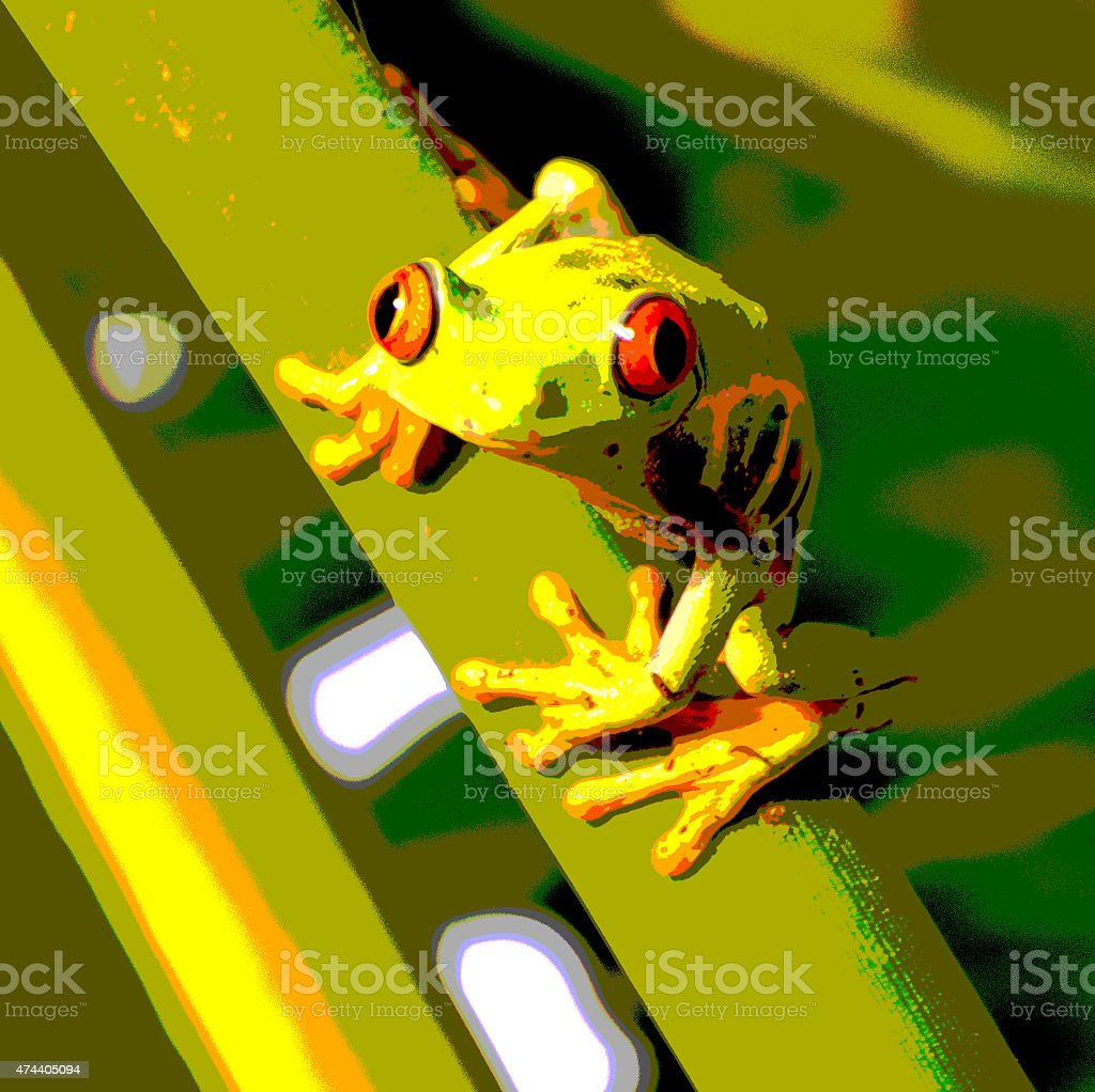 red eyed tree frog, Agalychnis callidryas, posterized stock photo