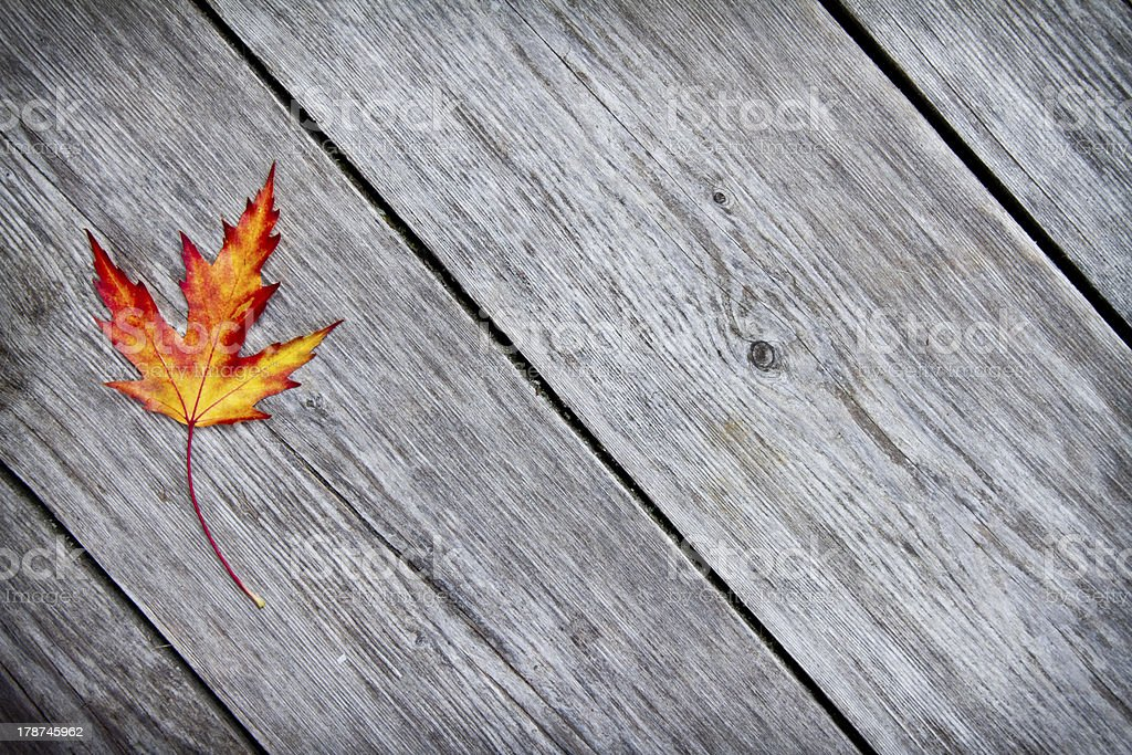 Red fall leaf on wood background royalty-free stock photo
