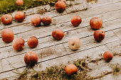 Red fallen apples on the wood ground in autumn garden. Concept of gardening, countryside, health eating and harvest.