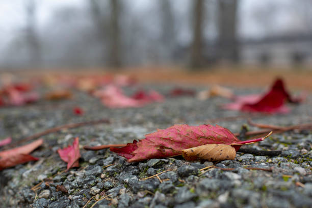 Red fallen autumn leaves on grey surface in the park stock photo