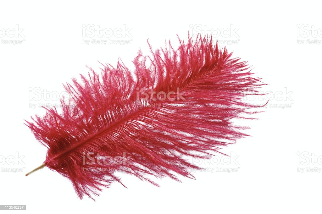 Red feather royalty-free stock photo