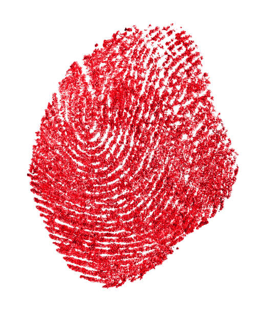 red fingerprint on a white paper. bloody fingerprint on a white background. imprint. macro. - deductive stock pictures, royalty-free photos & images