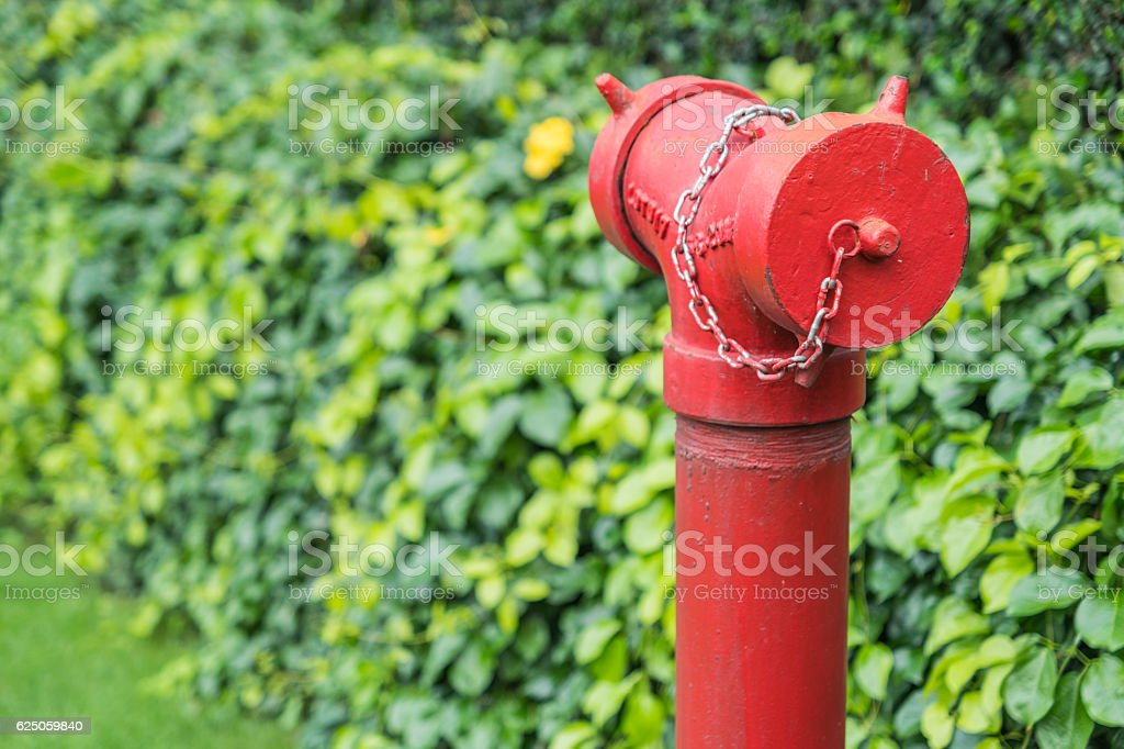 Red fire hydrant surrounded by green grass stock photo