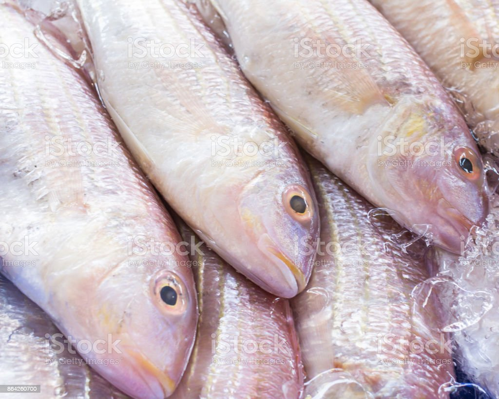 Red fish in market background royalty-free stock photo