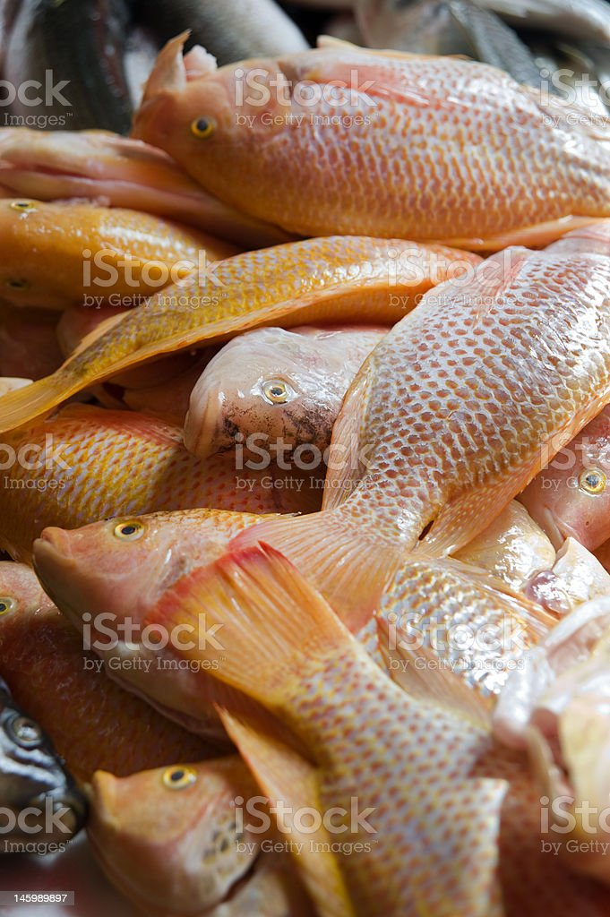 red fish in the market royalty-free stock photo