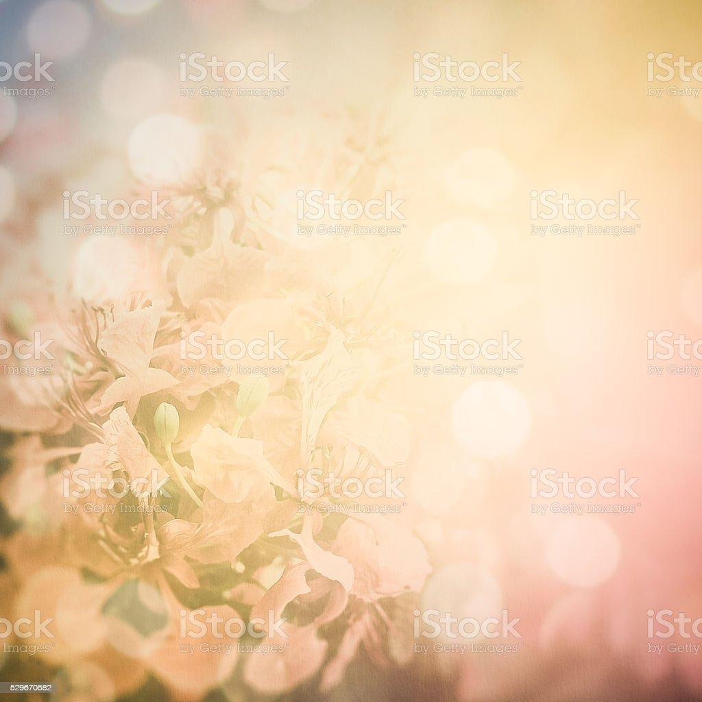 Red Flamboyant Flower On Paper Background Stock Photo Istock