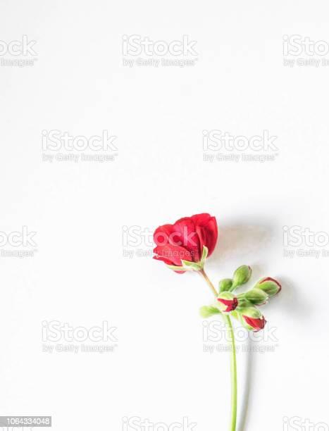 Red flower anemone isolate on white background picture id1064334048?b=1&k=6&m=1064334048&s=612x612&h=cql6exvprgjbk 130ttqqcerhf2pc0cd j98px8vuui=