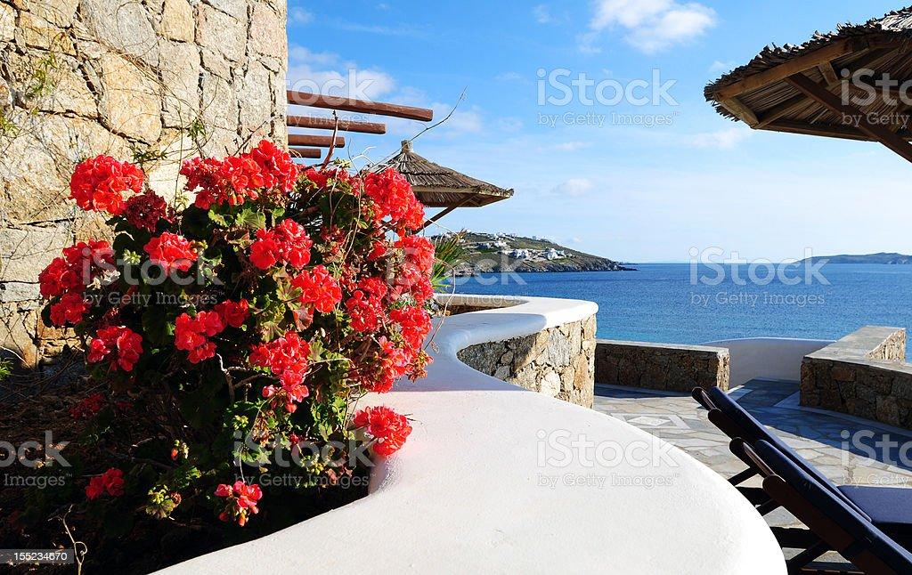 Red Flower At Seaside Resort royalty-free stock photo