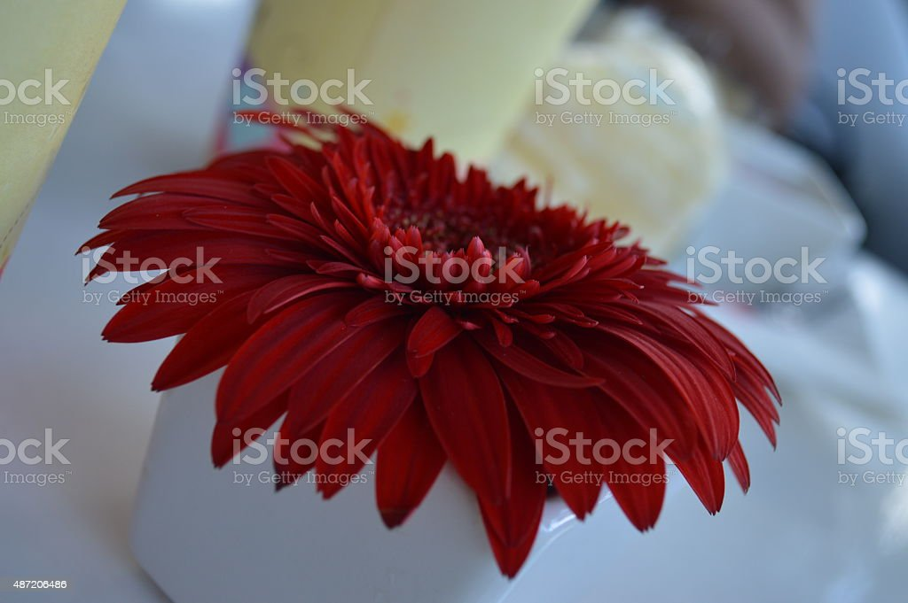 Red flower close-up stock photo