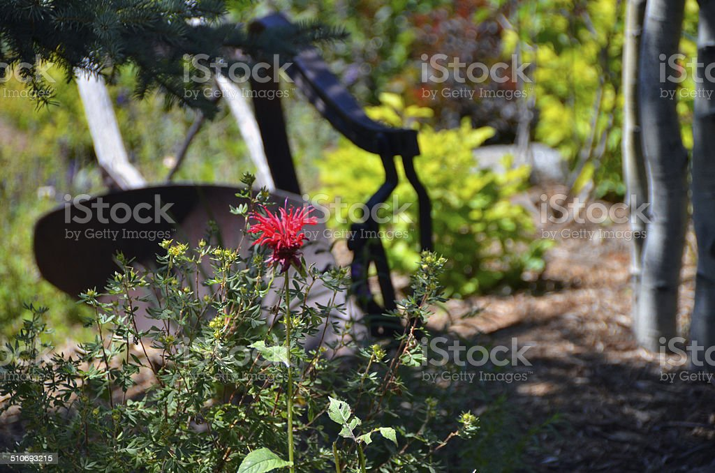 Red flower in mountain garden stock photo