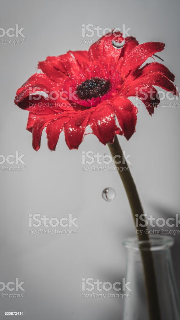 Red flower in vase stock photo
