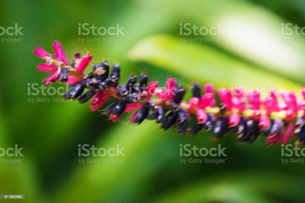 Red flower on green tropical background. Close-up picture stock photo