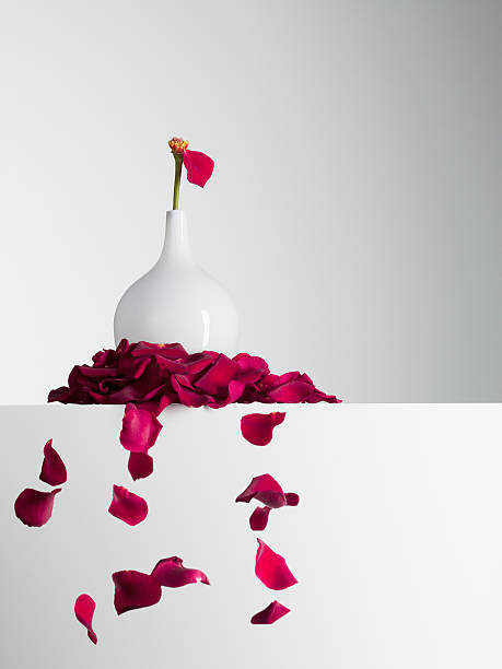 Red flower petals falling from stem in vase picture id103332782?b=1&k=6&m=103332782&s=612x612&w=0&h=3jibcen03 djovtyp2qjojlocdganzrcuodtj4ykogq=