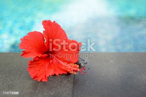 istock Red Flower 174773398