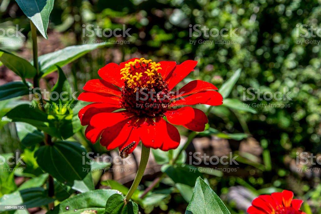 Red flower – Foto