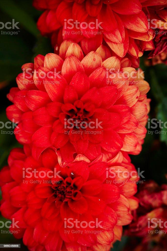 Röd blomma - Royaltyfri Blomkorg - Blomdel Bildbanksbilder