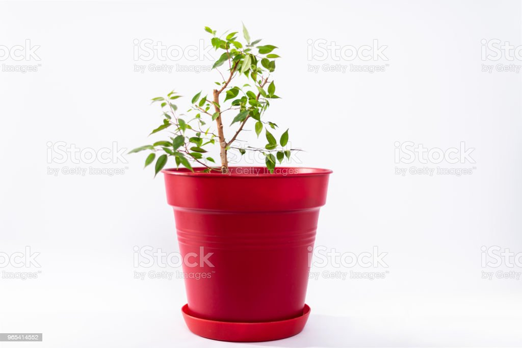 red flower pot royalty-free stock photo