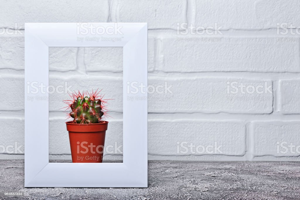Red flower pot with small cactus in white frame with copy space on...