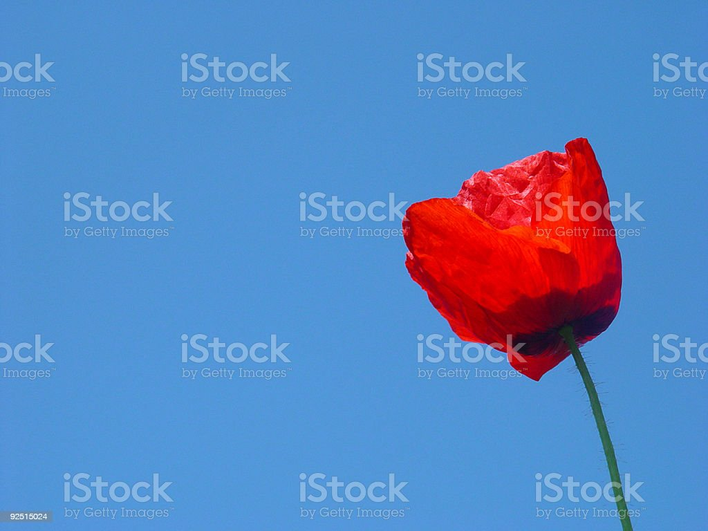 Red Flower Under a Blue Sky stock photo