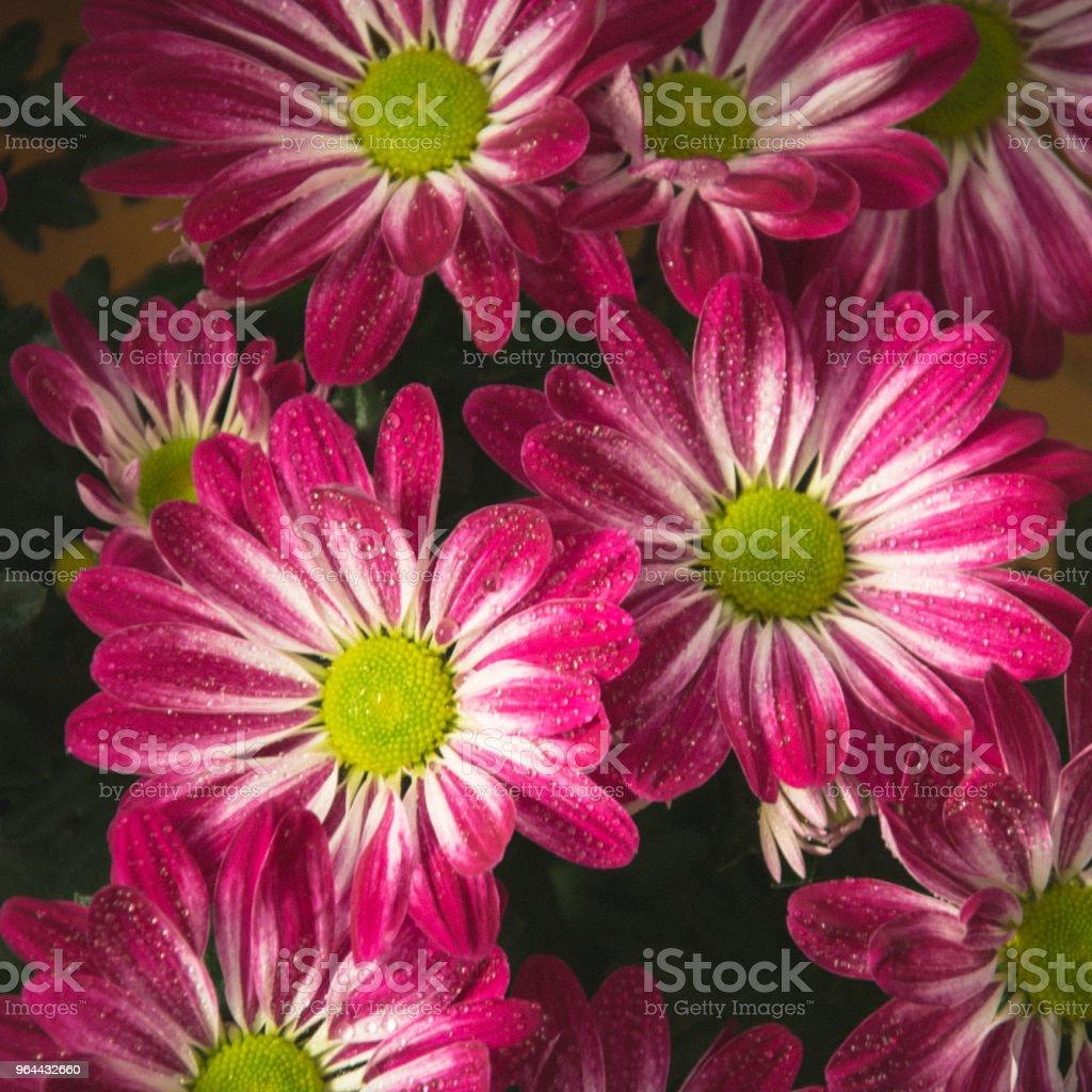 Flor vermelha com fundo de gotículas - Foto de stock de Amarelo royalty-free