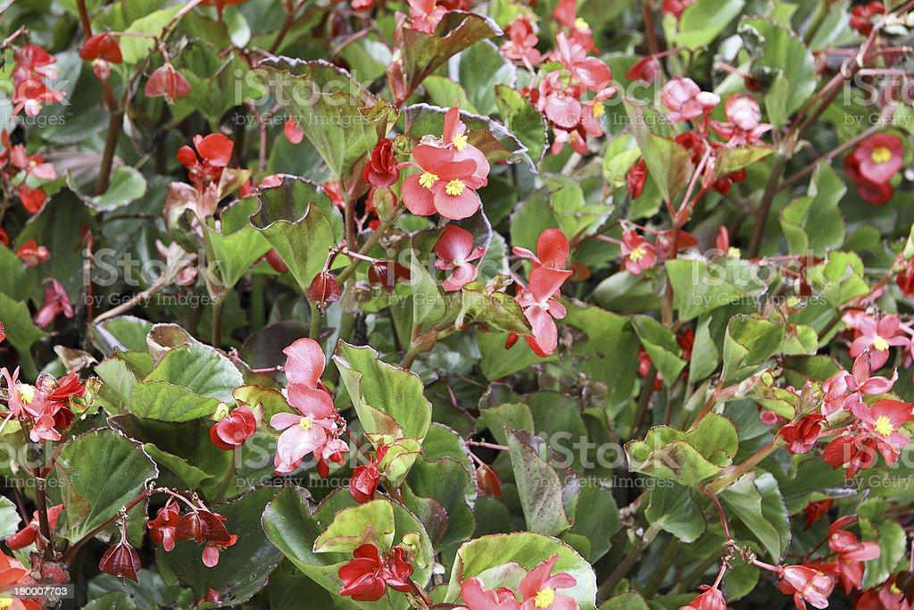 빨간색 및 녹색 식물과 꽃을 royalty-free 스톡 사진