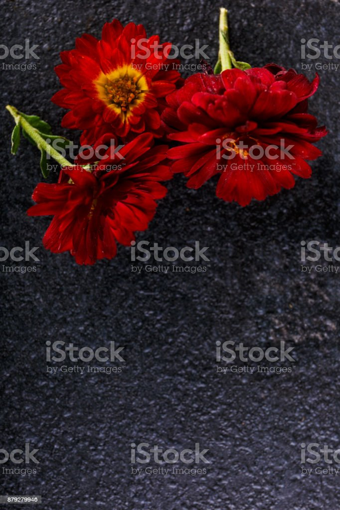 Red flowers close-up on a stone background stock photo
