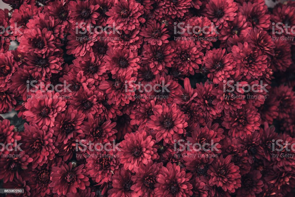 Red flowers flatlay template stock photo