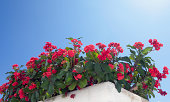 istock Red flowers, flower box and blu sky 181859317