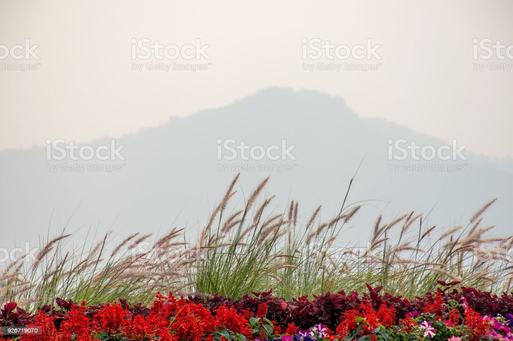 Red Flowers In Blooming And Grass Field With Mountain Landscape