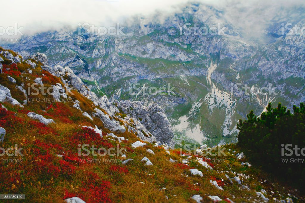 red flowers in the mountains stock photo