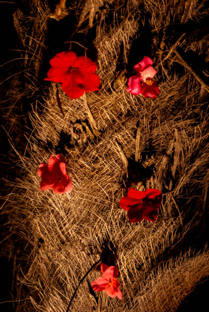 Red flowers on a tree bark - foto stock