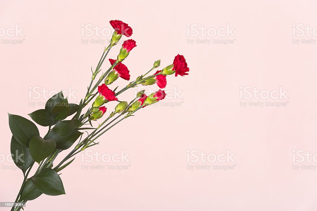Red flowers on pink background royalty-free stock photo