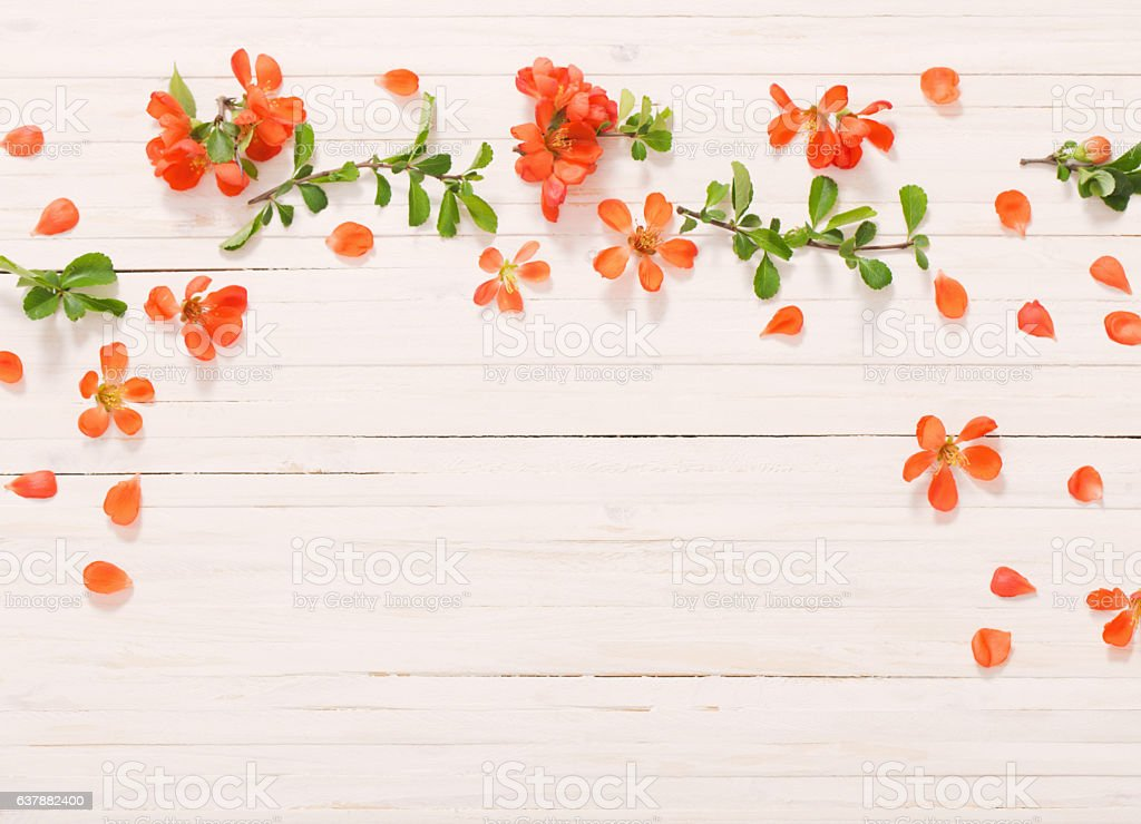 red flowers on white wooden background stock photo