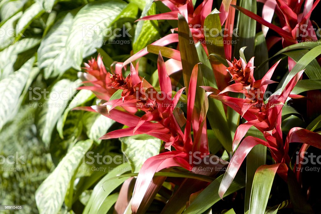 Red flowers royalty-free stock photo