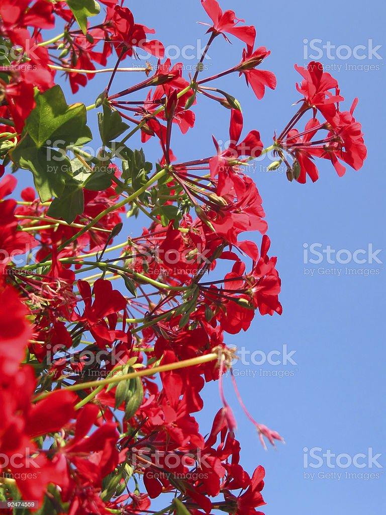 Rote Blumen auf den Himmel! Lizenzfreies stock-foto